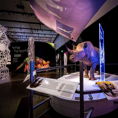View of the Skin exhibit with rhino specimen in foreground