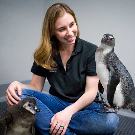 Biologist Amy Walters with two African penguins in her lap