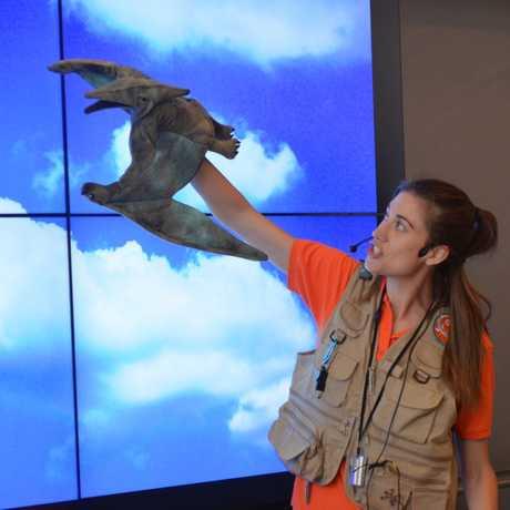 Pterosaur puppet flying through the sky.