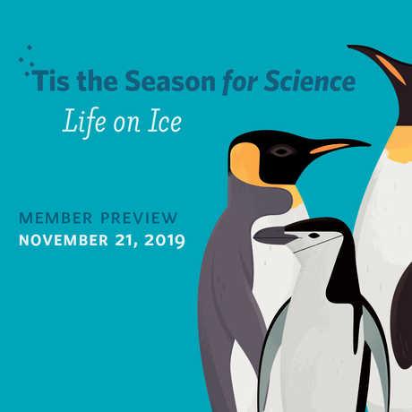 Illustration of different penguin species against a blue background