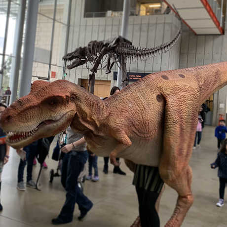 A T-rex costume worn by museum staff
