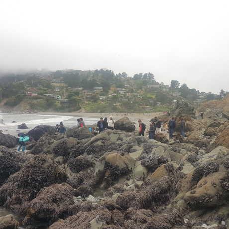 Muir Beach rocks and beach