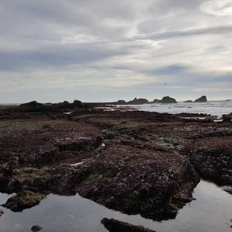 Pillar Point Reef and rocks in the background