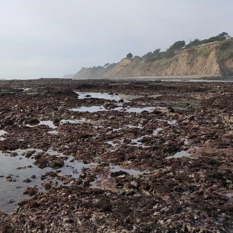 Duxbury Reef tidepools and cliffs