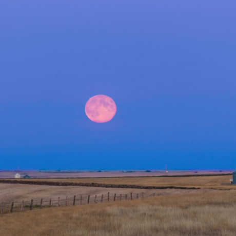 A pink Harvest Moon in the blue sky