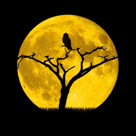 Hunters Moon with bird silhouette