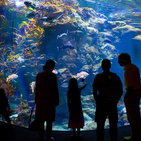 Silhouetted guests gaze at the colorful California Coast aquarium exhibit