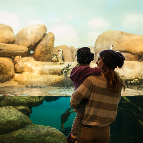 A woman holds a young girl in front of the penguin exhibit