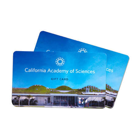 2 Academy gift cards
