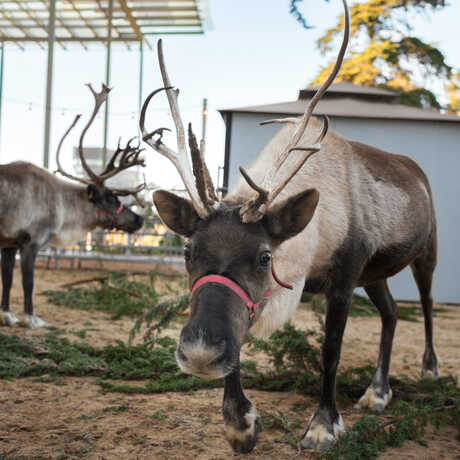 2 reindeer explore the East Garden