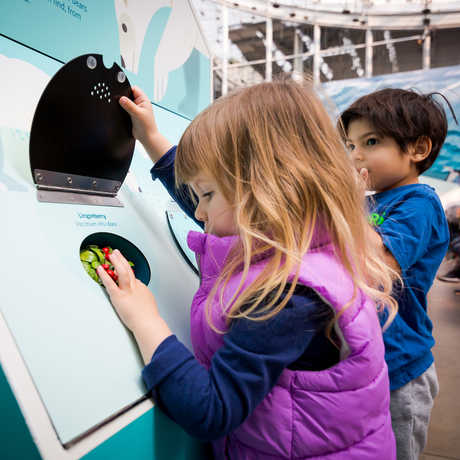 Kids explore hands-on activities in 'Tis the Season for Science exhibit