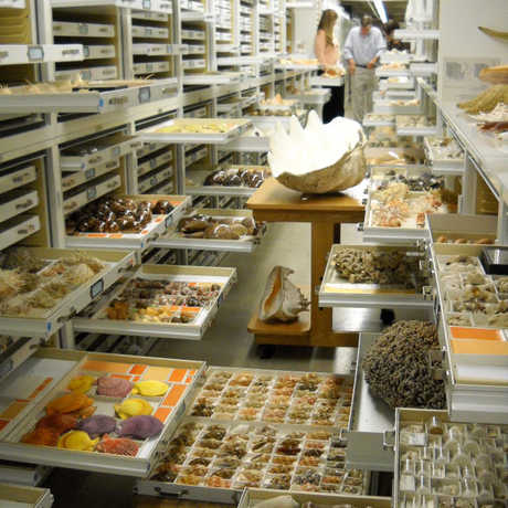 Malacological collections with specimens in drawers