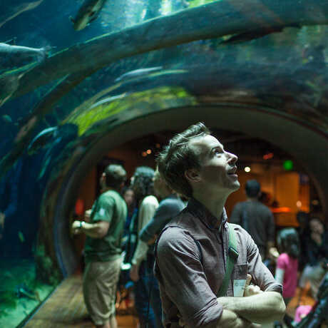 Visitors watch fishes swim over their heads in the rainforest tunnel.