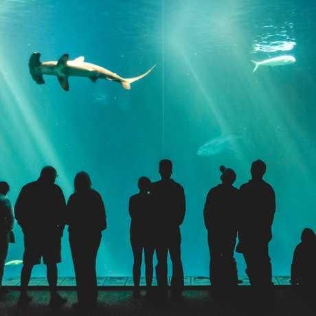Monterey Bay Aquarium Pacific Tank
