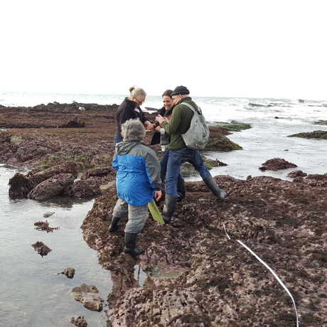 Adults tidepooling with a transect line going across the rocks
