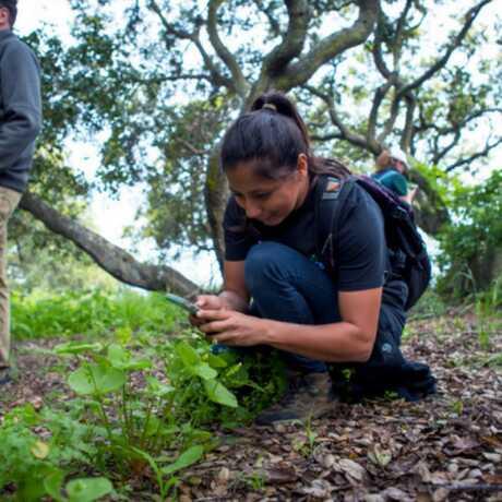 Participate in a guided nature walk in Golden Gate Park!