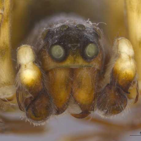Joshua Bell spider