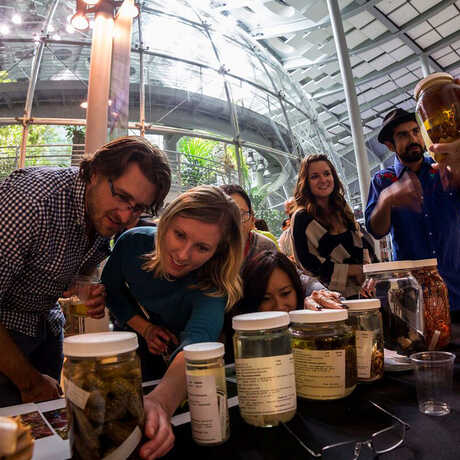 NightLife guests check out scientific specimens at the Academy