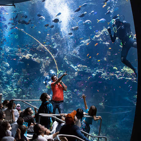 presenter talks to a diver in our coral reef exhibit