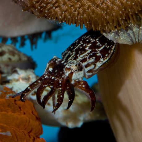 Photo: Richard Ross, California Academy of Sciences