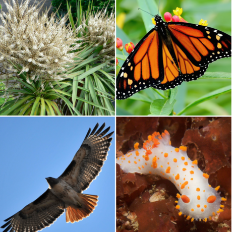 Grid of iNaturalist observations