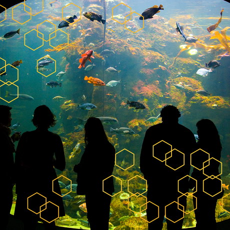 A group of guests looking at the California Coast exhibit