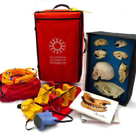 Skulls_Classroom_Kit_Display