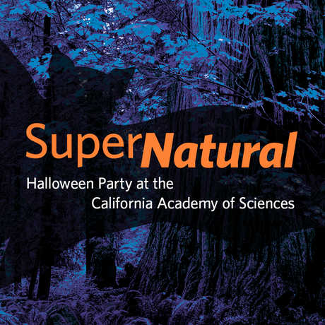 SuperNatural is the Academy's annual Halloween party fundraiser