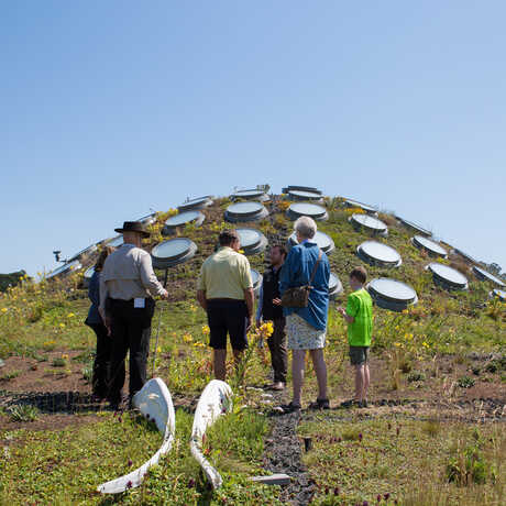 Guests atop the Living Roof on a VIP Tour