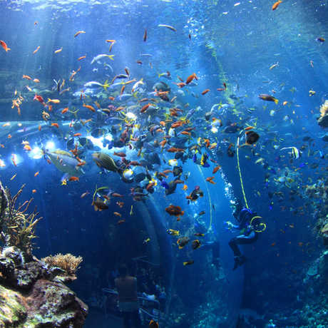 The Philippine Coral Reef exhibit by Will Love
