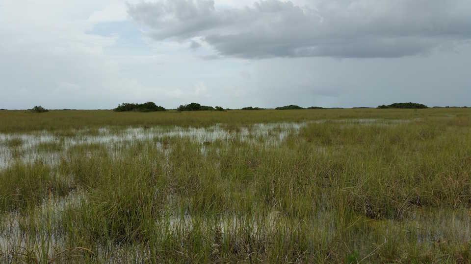Florida Everglades, Pietro Valocchi/Flickr