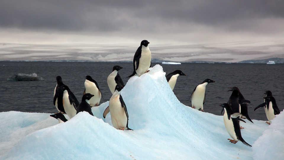 Long View Study No. 50 (The Future of Antarctica)
