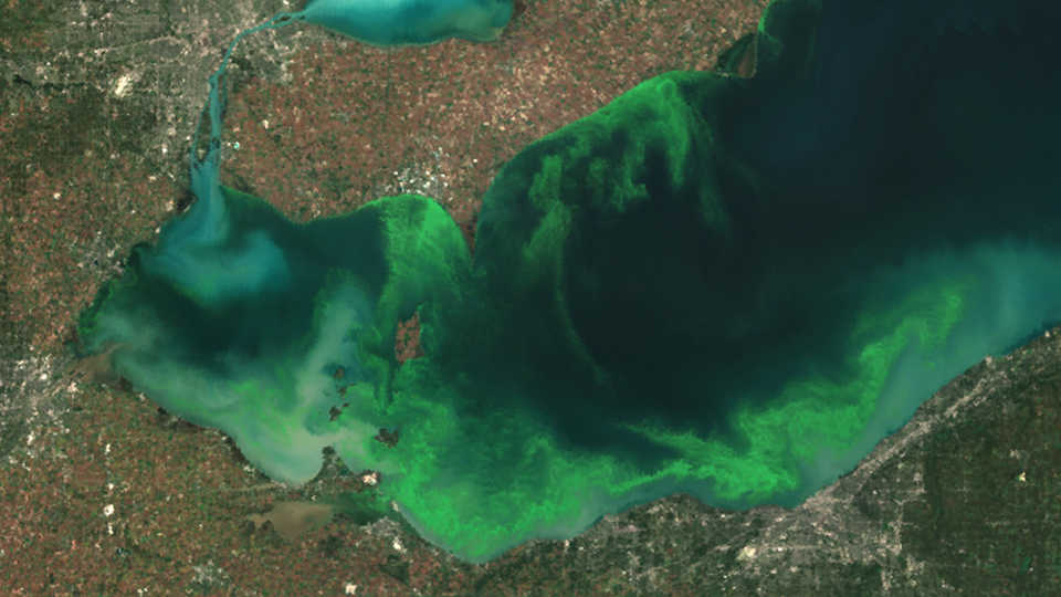 Bloom in Lake Erie, 2011, NOAA