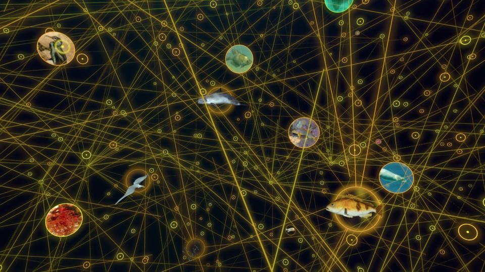 Food web from Habitat Earth