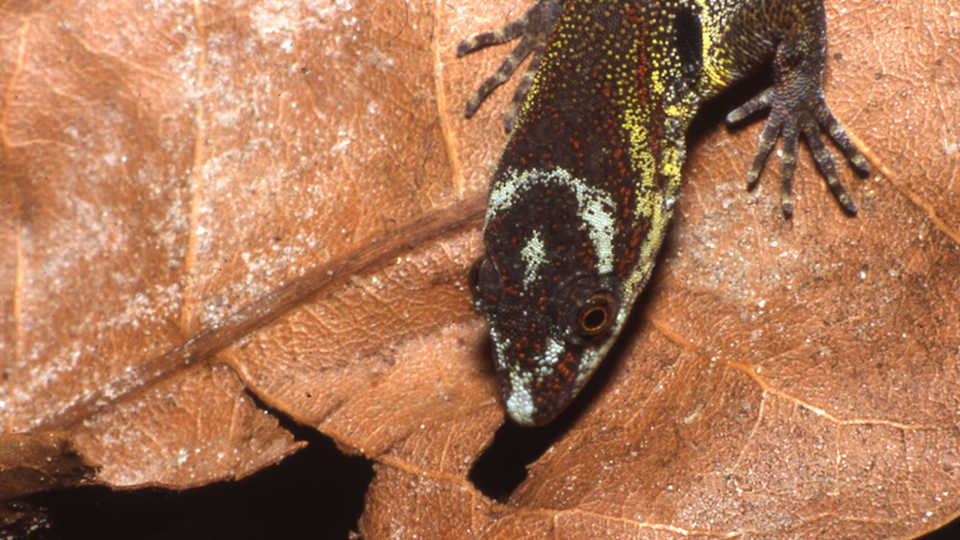The Evolution of Sticky Feet | California Academy of Sciences