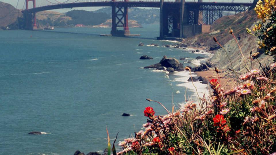 Golden Gate Bridge with coastal flora