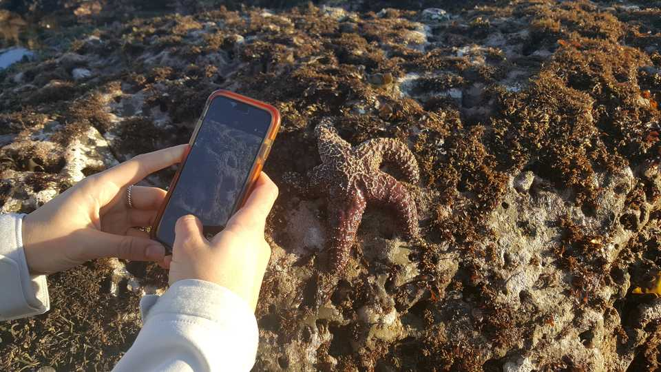 iphone taking a picture of a sea star