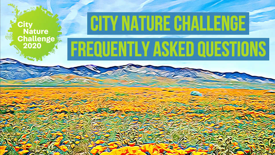 City Nature Challenge Frequently Asked Questions