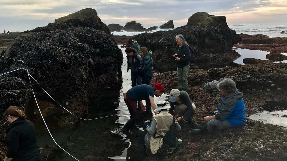 intertidal survey at pillar point reef