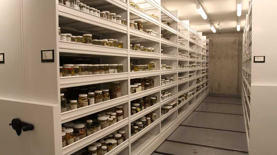 The Academy's herpetology collections