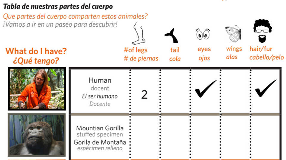 Our Chart of Body Parts student worksheet in English and Spanish