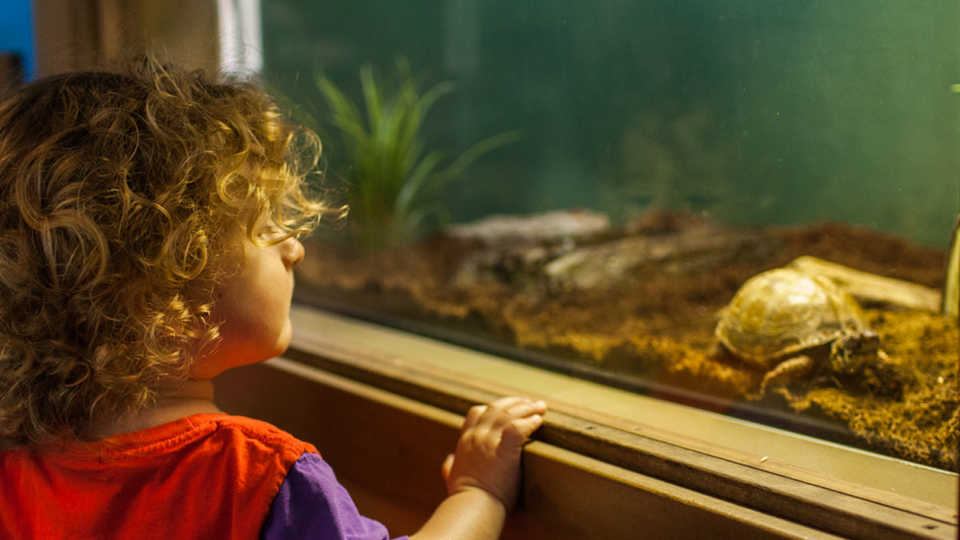 small child looks at turtle