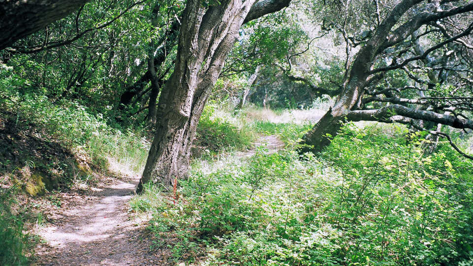 Junipero Serra Park
