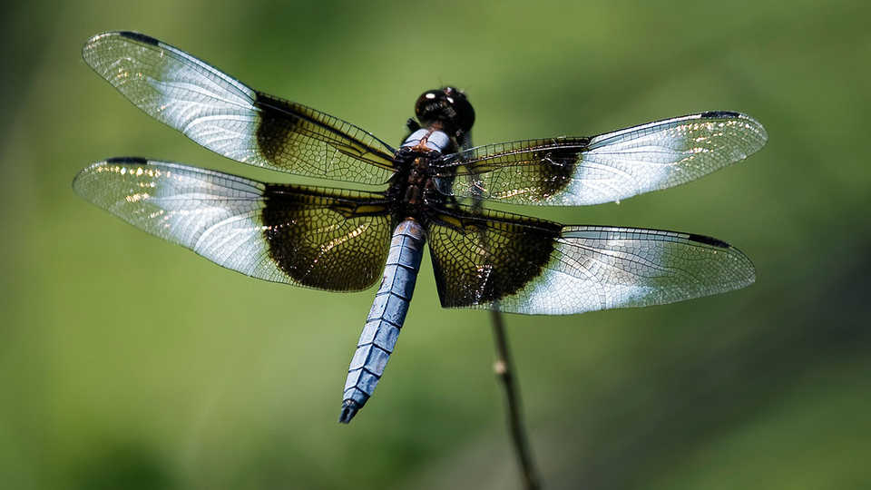 Dragonfly_JohnWright