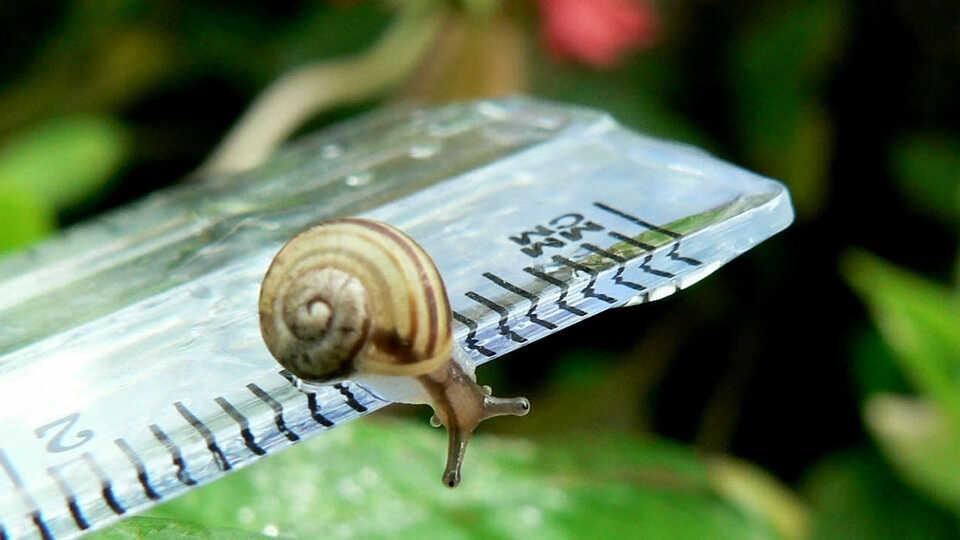 snail on ruler