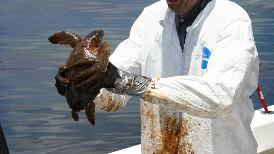 Sea turtle covered in oil