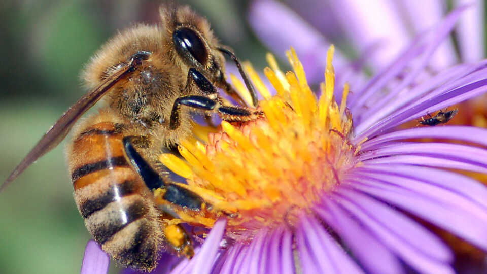 Lesson Plan | Flowers Seeking Pollinators