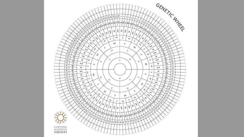 Genetic Wheel