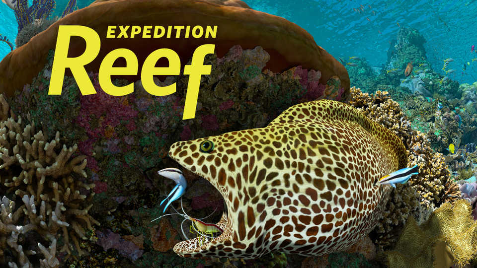 A moray eel gets a teeth cleaning by a shrimp in this Expedition Reef film still