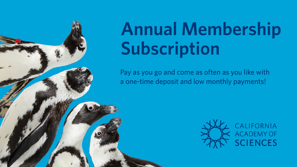 Annual Membership Subscription